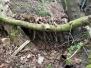 22-04-'17 Hutten bouwen